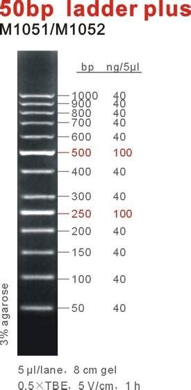 Sell 50bp DNA ladder/marker plus(id:9038916) from