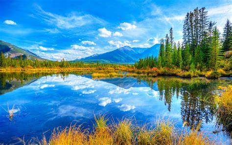 Lake And Yellow Grass, Pine Trees, Reflecting The Blue Sky